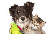 товары-для-животных
